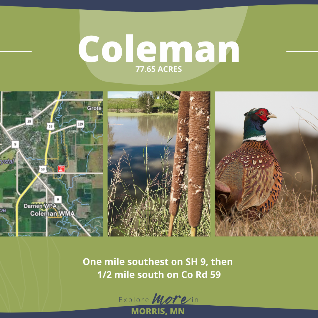 Morris-Hunting Blog-Coleman (5)